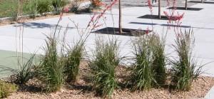 GLMV-Landscape-Design-Wichita-Transit